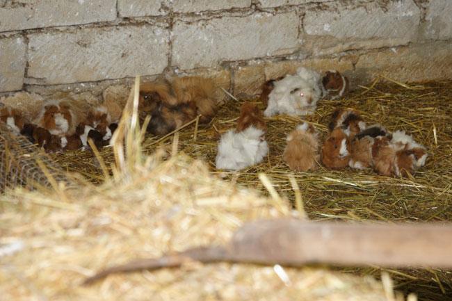 Allevamento coniglio nano riflessioni prima dell for Planimetrie dell interno della casa all aperto
